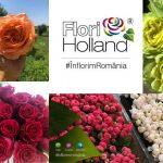Flori Holland din Timișoara
