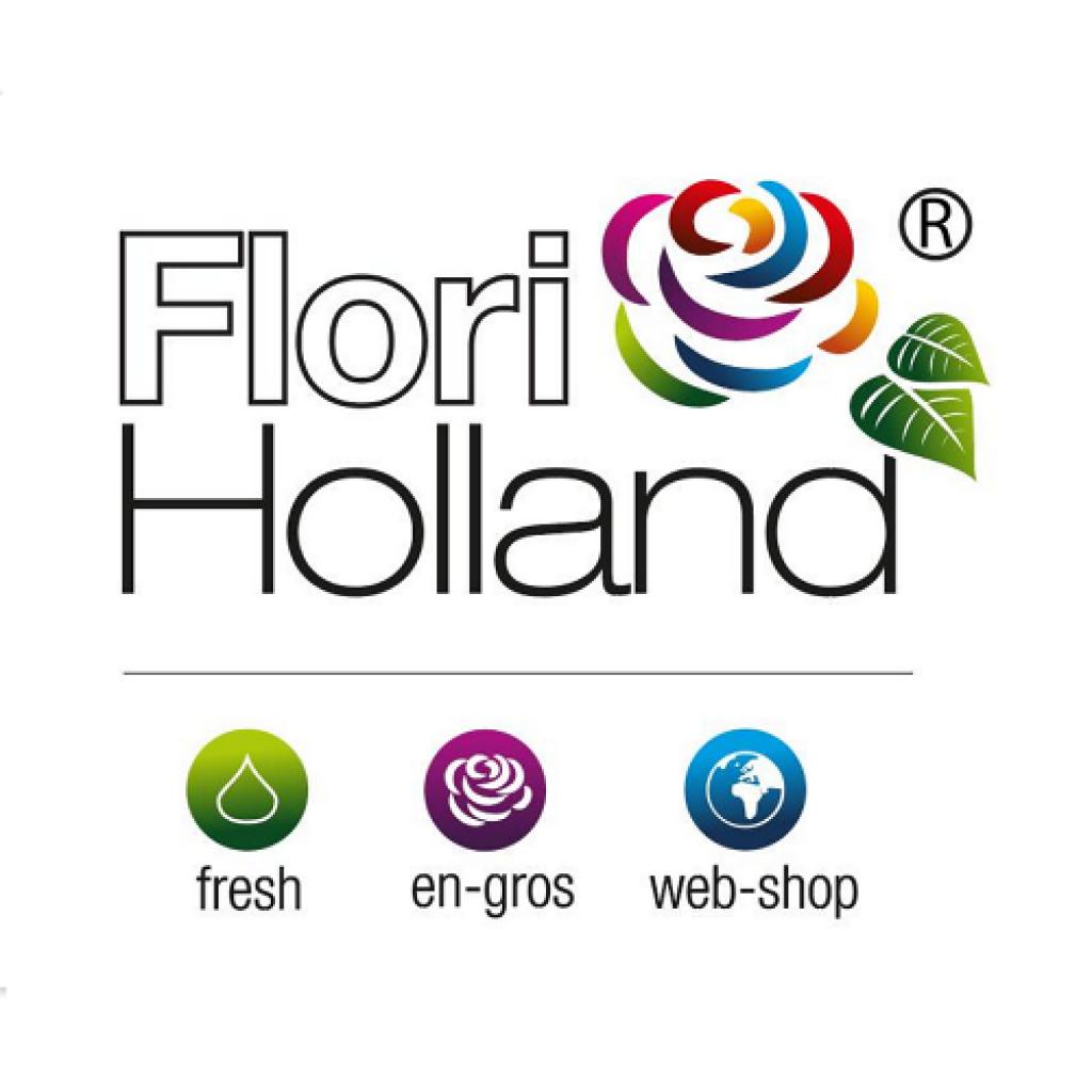 Logo al Flori Holland, importator de flori în România