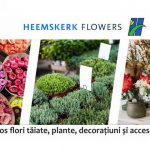 Hemskeerk Flowers - importator de flori în România